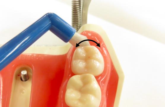 3-2.いちばん奥の歯を磨く拡大